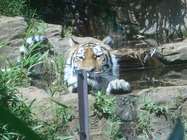 5/27 多摩動物公園の動物たちです!