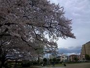 4/3 春の遠足~入学・進級おめでとう!~